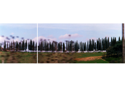 Untitled Diptych (Tuscan Trees)